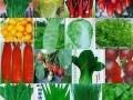 蔬菜种子冬季贮藏方法