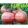 供应高产西红柿种子冠晨368