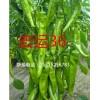 供应早熟 高产辣椒种子宏运36