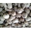 魔芋种子|魔芋种子价格|一代魔芋种子|魔芋种子|云南魔芋种子