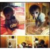阿克苏哪里有卖小猴子的