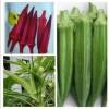 供应蔬菜种子黄秋葵 补肾菜 红秋葵