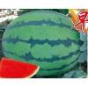 早生糖王900:花皮高圆形、极早熟西瓜 高糖西瓜 种子