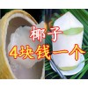 泰国椰子 椰皇 椰青批发 进口水果 水果批发