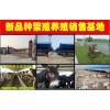 广东哪里有卖西门塔尔牛的