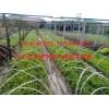 自产小苗;桃叶卫矛、红瑞木、红叶李、复叶槭
