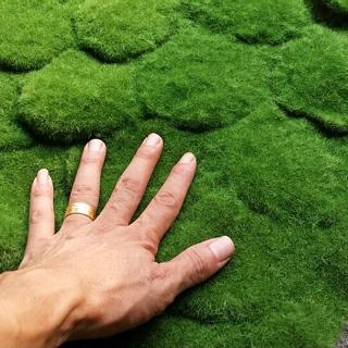 莆田市 仿真植物墙绿色假草坪 植毛海棉青苔草皮 苔藓