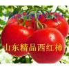 出售山东优质西红柿