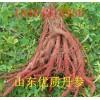大量出售山东优质丹参、黄芩