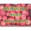 【2015年红富士苹果价格行情】15564255375