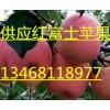 2015山东红富士苹果13468118977最新价格