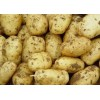 供应山东土豆批发,山东哪里批发土豆,山东土豆产地天天啪啪