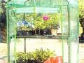 节省空间的小温室