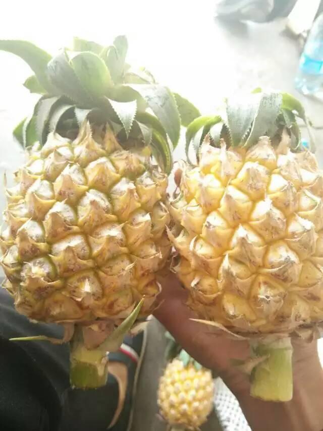 【荐】泰国进口水果货源微信号:tgjksg