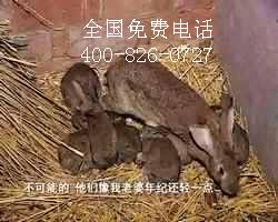 农村投资养殖什么动物好