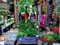 嘉兴鲜花市场也逐渐升温 价格明显回落