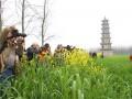 湖南沅江芦笋:嫩芽上的新产业