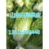 山东白菜今日久久热免费视频行情供应山东白菜基地13615499448