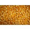民发养殖场常年大量收购玉米等饲料原料