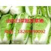 全国各地蔬菜批发市场大白菜价格