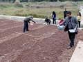 内江市开展2016年农作物新品种试验