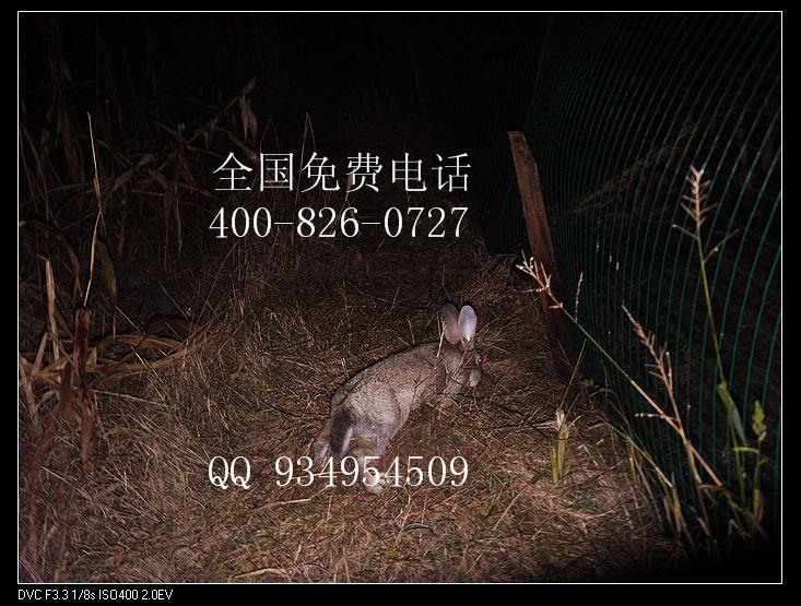 山东哪里能买到野兔种兔肉兔