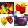 五彩甜椒种子
