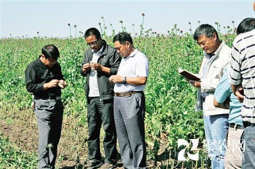 刘友山根据谢尔塔拉地区干旱少雨
