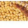 供应黄豆黄素 桃叶珊瑚苷 羟基酪醇 通关藤苷H