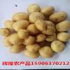 供应小土豆