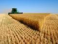 河南省小麦最低收购价2.36元/公斤
