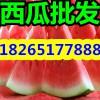 【薄皮京欣西瓜市场最新天天啪啪】