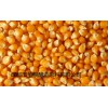 求购高粱大米玉米小麦碎米淀粉豆类糯米