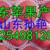 【18254981288】山东藤木/疗伏苹果产地山东苹果价格