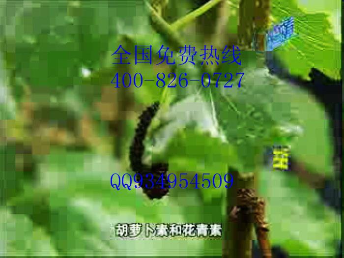 果桑苗种植基地联系地址电话