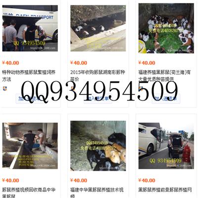 云南四川贵州供应豚鼠野兔种苗养殖技术
