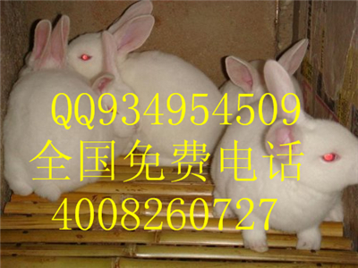 适合创业养殖的食草小动物兔子养殖