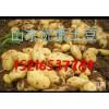 山东土豆大量上市