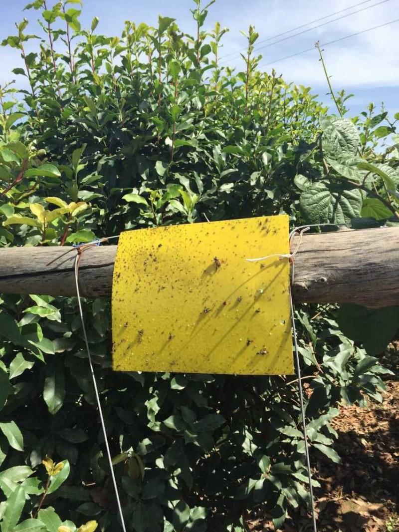粘虫板,虫板,绿色环保首选