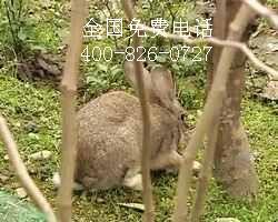 适合农庄农家乐的动物野兔
