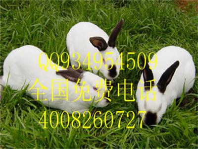 目前獭兔的养殖成本和效益分析