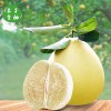 【预售】白心蜜柚 特产金柚新鲜水果 两只装 包邮