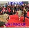 江西斗羊多少钱一只 小尾寒羊多少钱斤