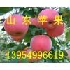 山东红星苹果大量上市了山东红星苹果产地将军苹果批发价格