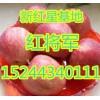 15244340111山东优质新红星苹果基地最新行情