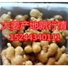 15244340111生姜基地大量供应