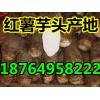供应红薯批发多少钱 山东芋头产地男人天堂在线