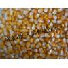 收购高粱大米玉米小麦等酿造原料