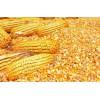 大量收购玉米、花生粕、油糠、菜粕、大豆
