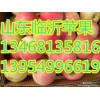 山东红富士苹果基地13954996619山东富士苹果批发销售